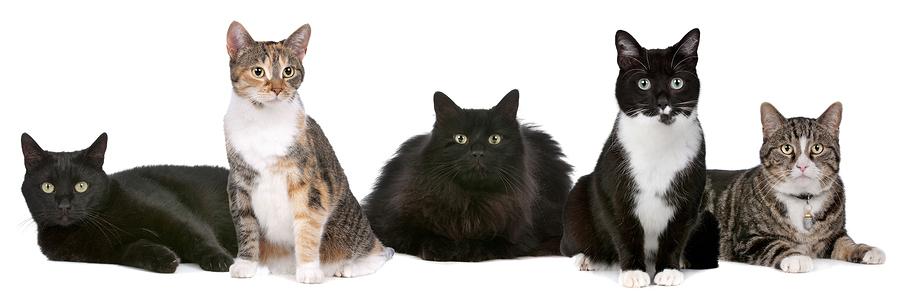 resourcescats